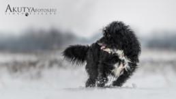 Havas kutyafotó