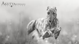 Agár kutyafotózás
