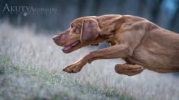 Professzionális kutyafotózás