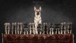 német juhász kutya alomfotózás