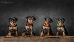 alomfotózás kutyakölyköknek