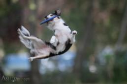 kutyák fotózása mozgás közben