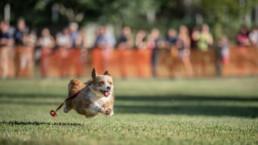 kutyák fotózása futás közben