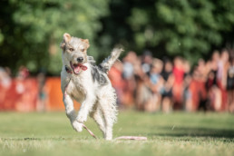 kutyák fotózása játék közben