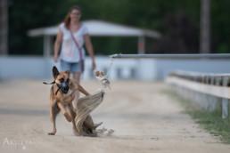 kutyás gyorsasági verseny fotózása