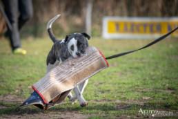 kutya kiképzés fotózása
