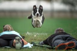 Kutyafotózás oktatás