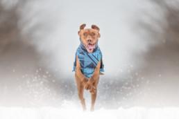 kutya termék fotózás