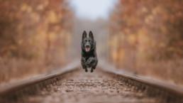 szabadtéri kutyafotózás