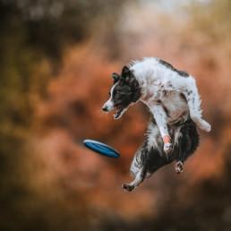 kutyák fotózása