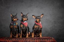 műtermi kutya fotózás