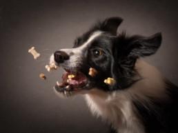 kreatív kutya portré fotózás