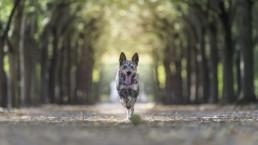 kutya portré fotózás szabadtéren